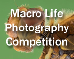 Macro Life Photography Competition