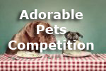 Adorable Pets Photography Competition