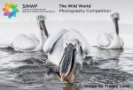 The Wild World Photography Competition